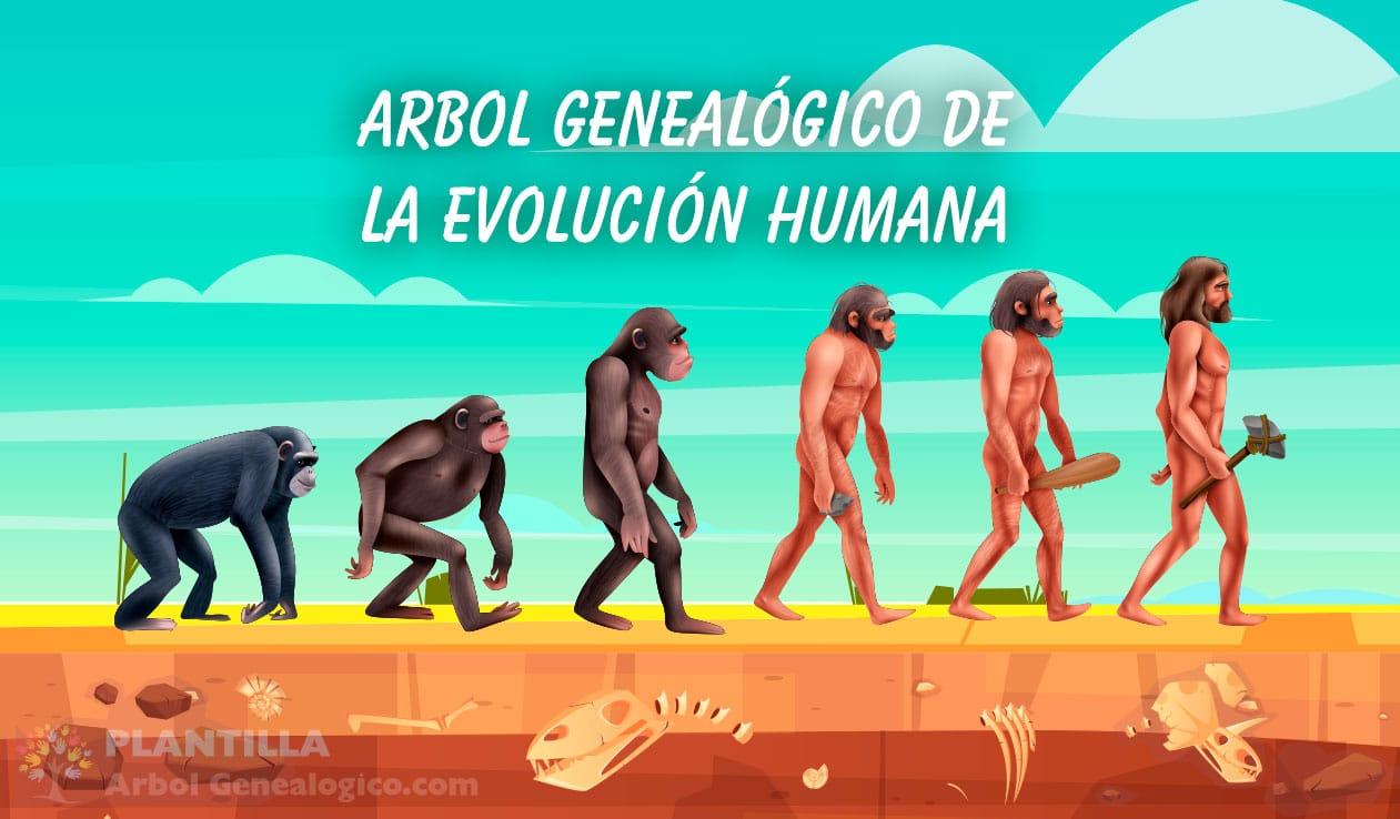 Árbol genealógico Evolución humana